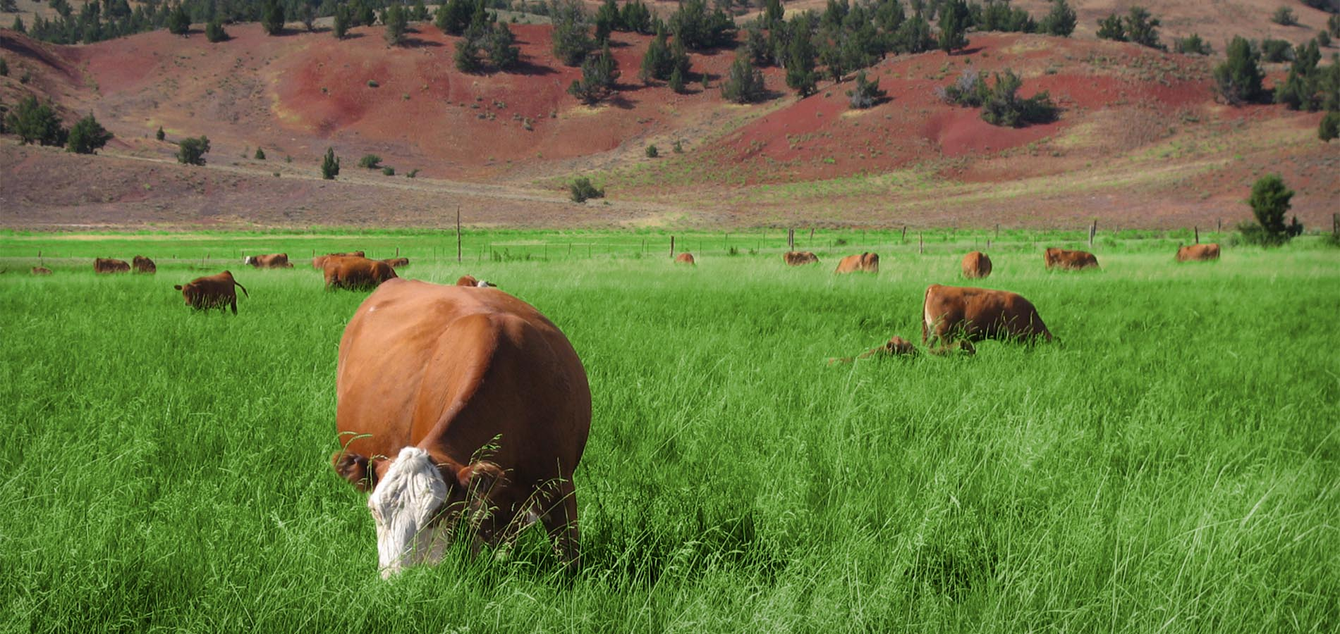 American Grassfed Association Grazing